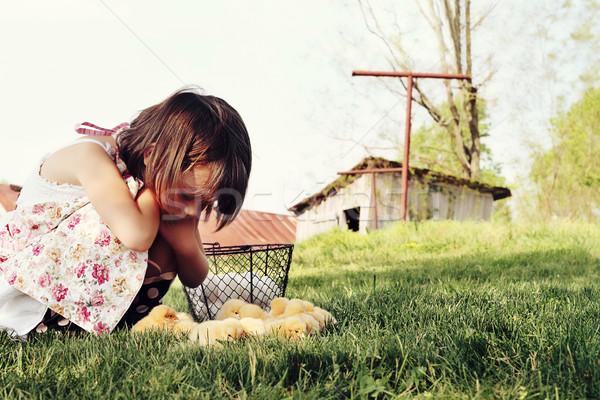 Child Watching Chicks Stock photo © StephanieFrey