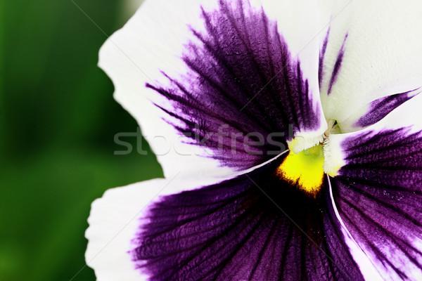 Stock fotó: Lila · fehér · makró · szelektív · fókusz · központ · virág