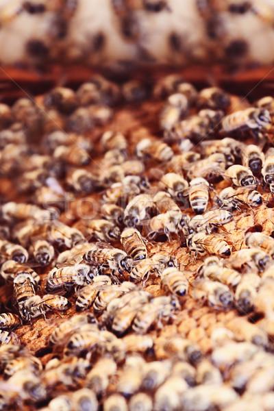 Fésű csoport természet arany méh fotó Stock fotó © StephanieFrey