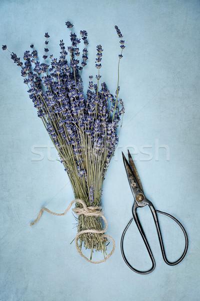 Stock photo: Lavender and Antique Scissors