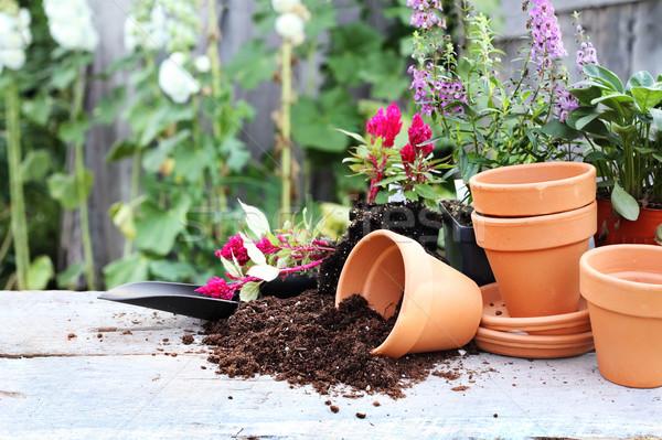 Gardening Stock photo © StephanieFrey