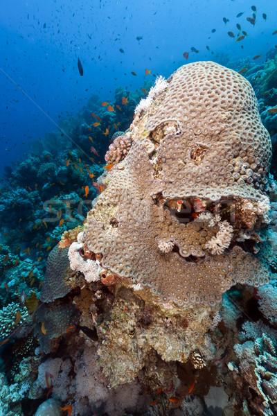 Hal trópusi Vörös-tenger tájkép tenger háttér Stock fotó © stephankerkhofs