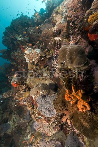 тропические рыбы коралловые рыбы воды природы Сток-фото © stephankerkhofs