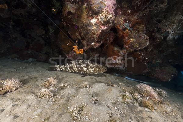 тропические воды солнце природы океана Сток-фото © stephankerkhofs