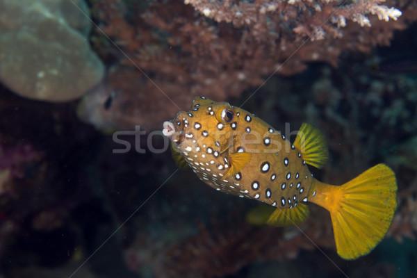 Citromsárga Vörös-tenger űr utazás szín sötét Stock fotó © stephankerkhofs