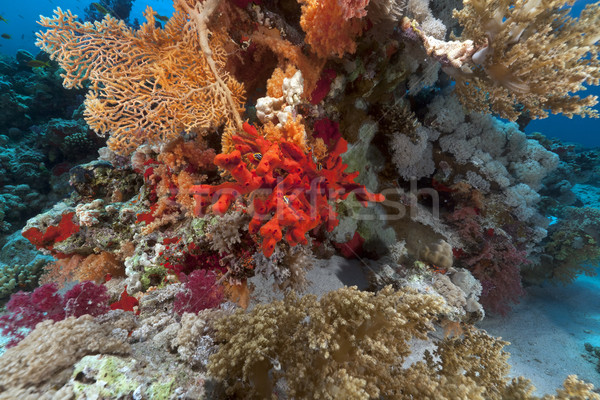 Piros szivacs trópusi Vörös-tenger hal tájkép Stock fotó © stephankerkhofs