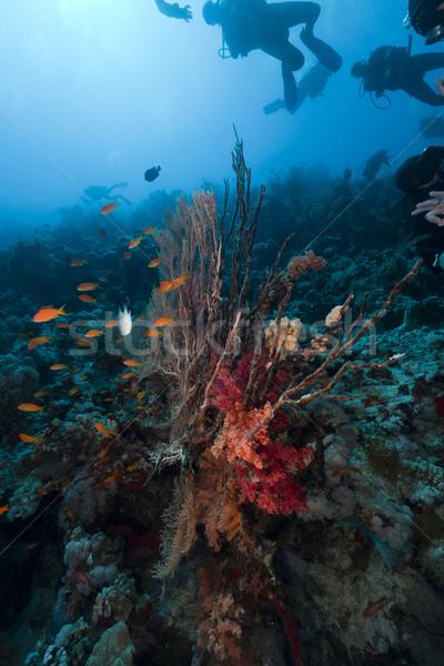 Scuba tropische rode zee vis landschap zee Stockfoto © stephankerkhofs
