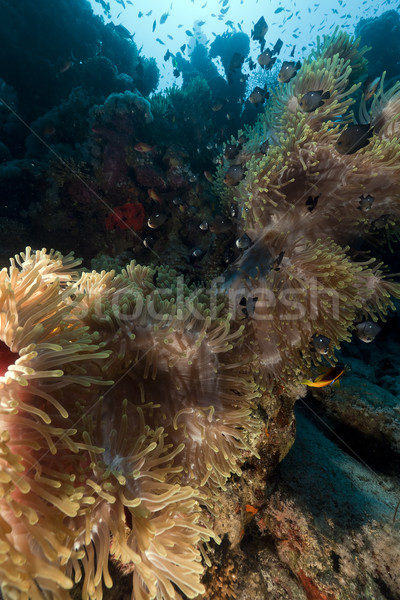 Magnífico mar vermelho água sol natureza paisagem Foto stock © stephankerkhofs