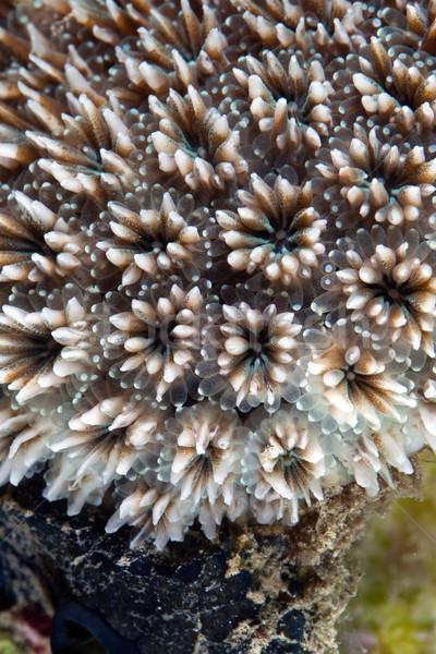 Korall textúra Vörös-tenger víz hal kék Stock fotó © stephankerkhofs