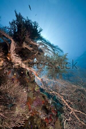 солнце рыбы природы пейзаж морем Сток-фото © stephankerkhofs