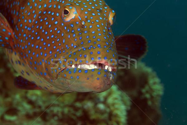 воды рыбы синий жизни Сток-фото © stephankerkhofs