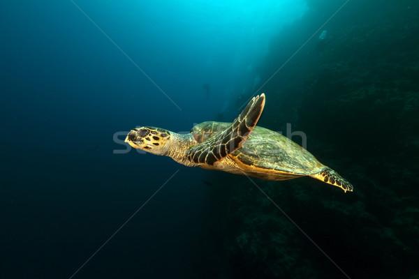 черепахи рыбы пейзаж морем фон Сток-фото © stephankerkhofs