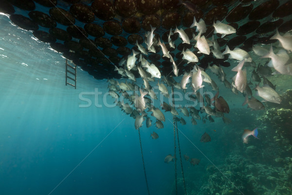 Fish gathering under a floating jetty. Stock photo © stephankerkhofs