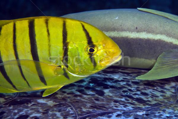 Juvenilis arany űr utazás szín sötét Stock fotó © stephankerkhofs