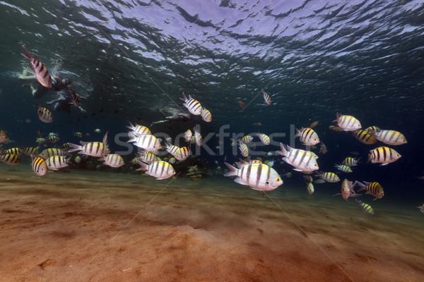 Trópusi Vörös-tenger víz nap természet óceán Stock fotó © stephankerkhofs