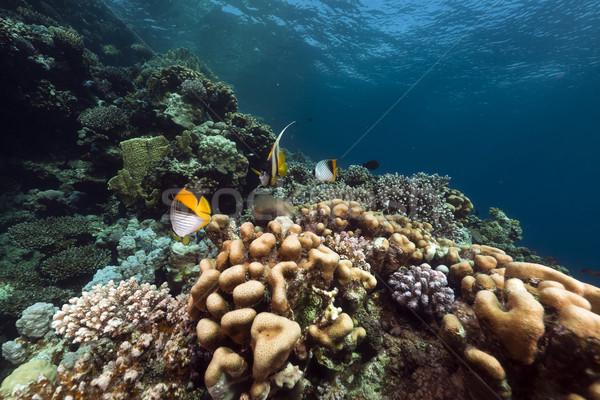 Tropikal sualtı manzara kızıl deniz su balık Stok fotoğraf © stephankerkhofs