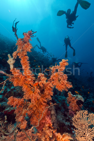 Divers and tropical reef in the Red Sea. Stock photo © stephankerkhofs