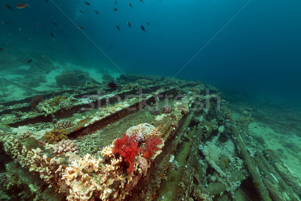 Remains and cargo of the Yolanda  in the Red Sea. Stock photo © stephankerkhofs