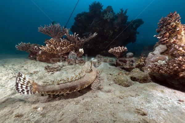 Vörös-tenger korall víz hal természet tájkép Stock fotó © stephankerkhofs