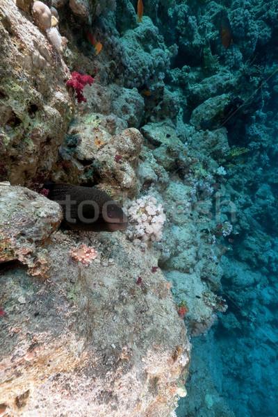 гигант тропические рыбы пейзаж морем Сток-фото © stephankerkhofs