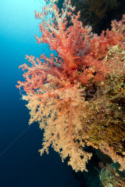 Trópusi Vörös-tenger hal tájkép tenger háttér Stock fotó © stephankerkhofs