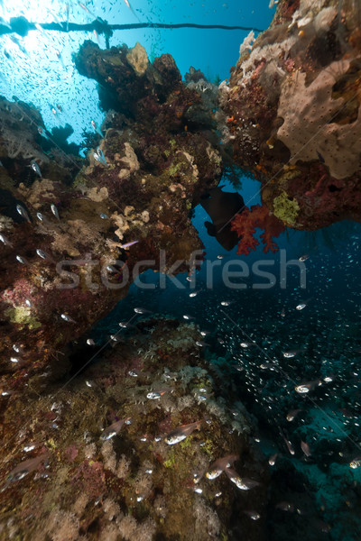 Fish and coral in the Red Sea. Stock photo © stephankerkhofs