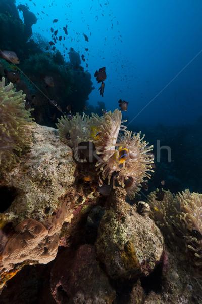 Magnífico mar rojo agua peces naturaleza paisaje Foto stock © stephankerkhofs
