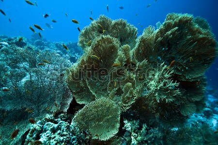 Tropical reef and fish in the Red Sea. Stock photo © stephankerkhofs