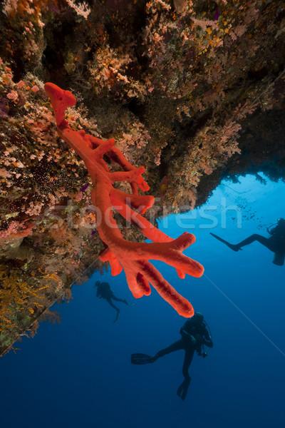 Piros szivacs Vörös-tenger hal természet tájkép Stock fotó © stephankerkhofs