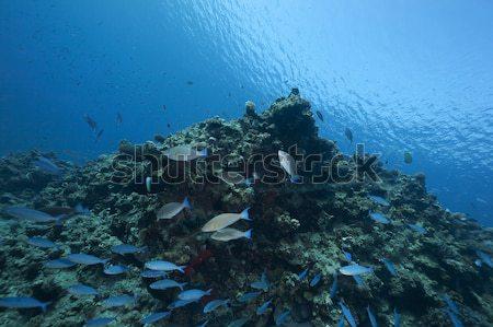 Сток-фото: рыбы · океана · природы · пейзаж · морем