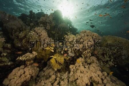 Onderwater grot zonnestralen rode zee water vis Stockfoto © stephankerkhofs