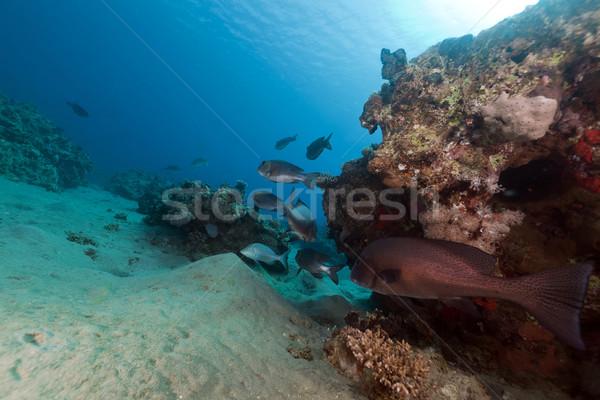 Hal trópusi Vörös-tenger víz nap természet Stock fotó © stephankerkhofs