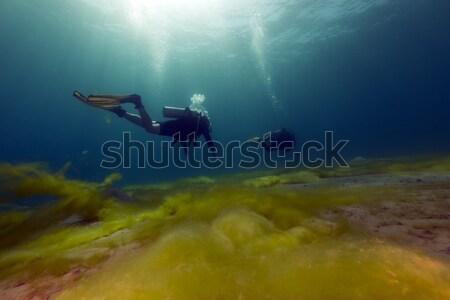 スキューバダイビング 紅海 水 太陽 風景 背景 ストックフォト © stephankerkhofs