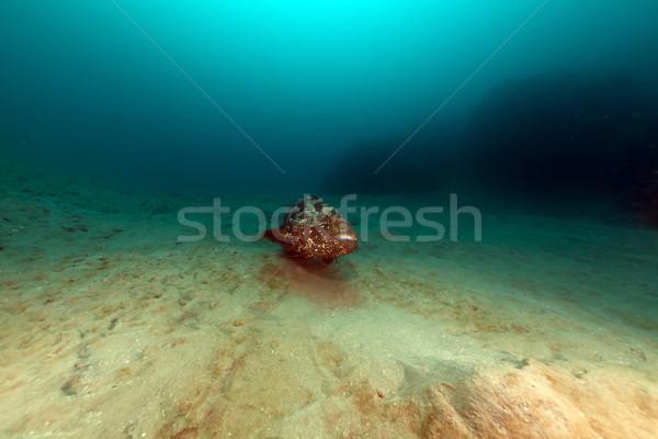 Vörös-tenger víz hal természet tájkép háttér Stock fotó © stephankerkhofs