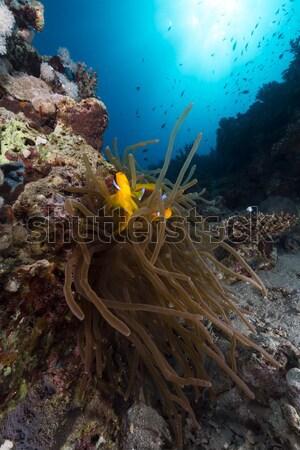 Vörös-tenger víz nap természet óceán kék Stock fotó © stephankerkhofs
