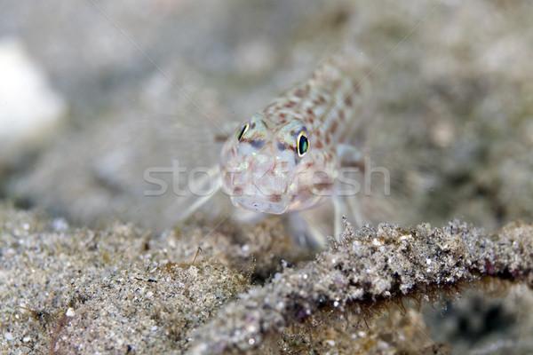 Díszített közelkép víz hal kék élet Stock fotó © stephankerkhofs