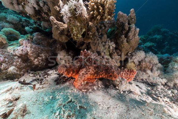 рыбы природы пейзаж морем фон Сток-фото © stephankerkhofs