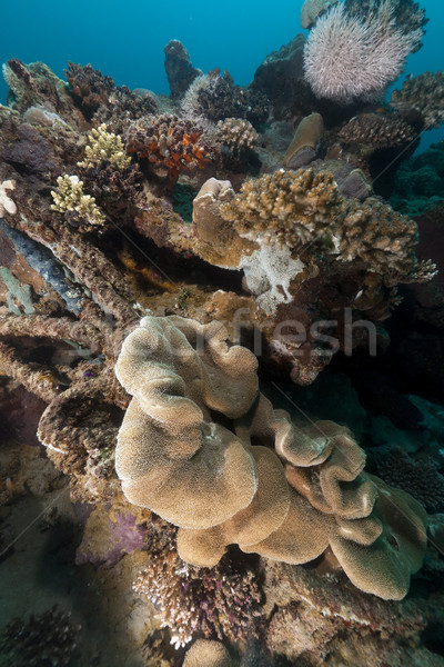 Poissons tropicaux corail mer rouge poissons eau nature Photo stock © stephankerkhofs