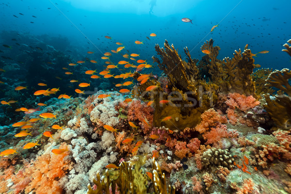 рыбы тропические воды пейзаж морем Сток-фото © stephankerkhofs