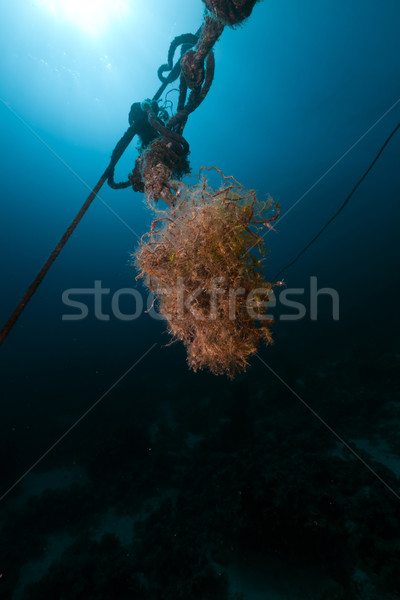 Mooring rope and fish in the Red Sea. Stock photo © stephankerkhofs