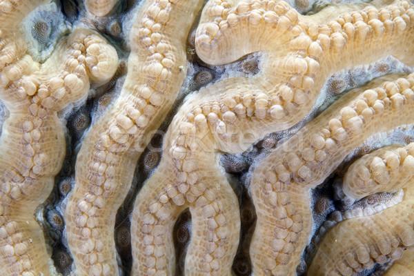 подробность коралловые воды рыбы синий Сток-фото © stephankerkhofs