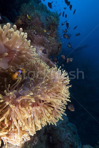 великолепный рыбы пейзаж морем фон Сток-фото © stephankerkhofs