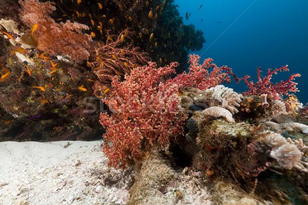 тропические подводного декораций воды рыбы Сток-фото © stephankerkhofs