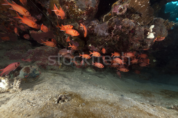 Stock photo: Fish and tropical reef in the Red Sea.