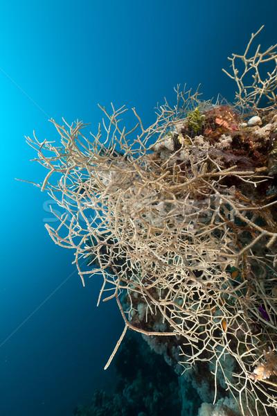 коралловые воды рыбы природы Сток-фото © stephankerkhofs