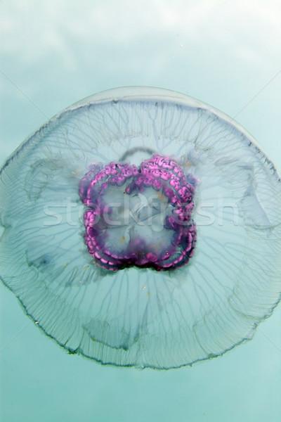 Hold meduza Vörös-tenger űr utazás szín Stock fotó © stephankerkhofs