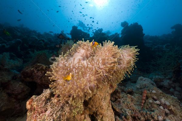 Foto stock: Magnífico · mar · rojo · agua · peces · naturaleza · paisaje