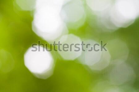 green bokeh abstract light background Stock photo © stepstock
