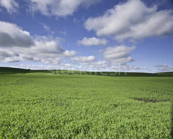 области облака фермы холмы пушистый небе Сток-фото © stockfrank