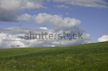 Palouse Clouds Stock photo © stockfrank